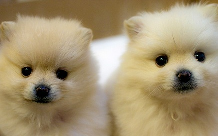 Puppies 4 Sale | Dog Breeds Picture